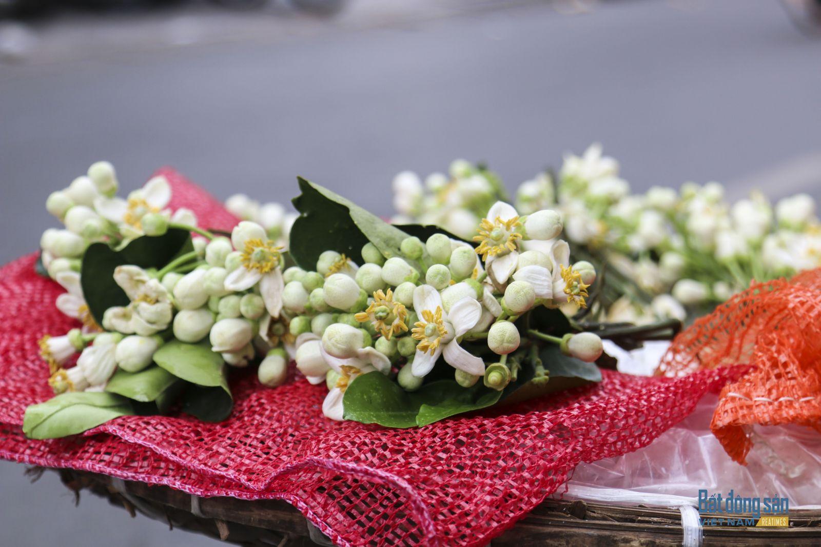 Hà Nội dịu dàng mùa hoa bưởi về trên phố