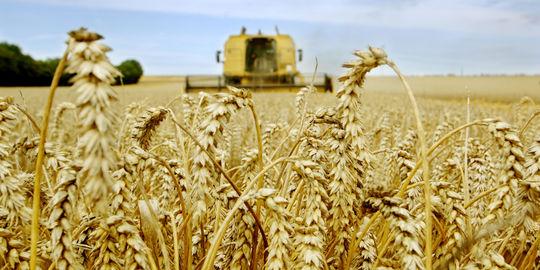 Giá lương thực toàn cầu tăng cao nhất trong 7 năm, lĩnh vực nào sẽ hưởng lợi?
