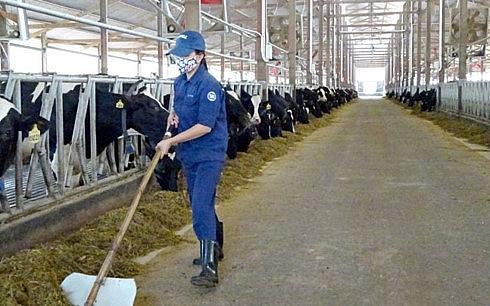 Doanh nghiệp đầu tư cơ sở chăn nuôi được hỗ trợ tới 10 tỷ đồng/dự án