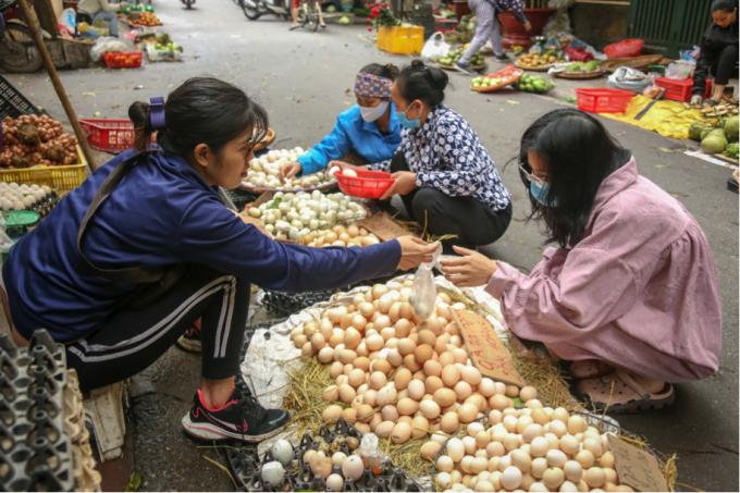 Giá trứng gà giảm mạnh chưa từng có, người chăn nuôi lao đao chống đỡ