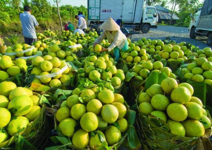 Kịp thời hỗ trợ kết nối đầu ra cho nông sản tại các địa phương đang giãn cách xã hội