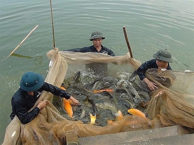 Hà Nội vẫn còn nhiều dư địa để phát triển nuôi trồng thủy sản