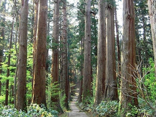 Xây dựng cơ chế, chính sách hỗ trợ chuyển đổi cơ cấu trồng rừng