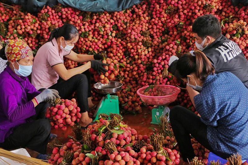 Chuyển đổi số nền nông nghiệp, vải thiều Bắc Giang
