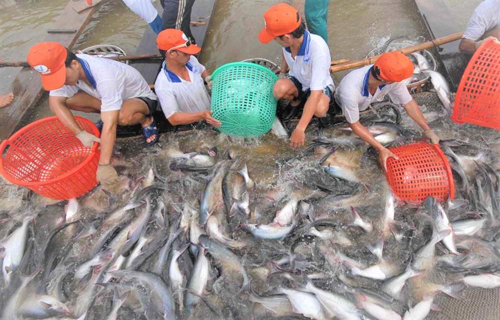 Mexico trở thành thị trường xuất khẩu cá tra hàng đầu của Việt Nam