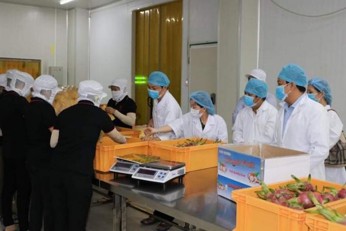 Tiền Giang: Doanh nghiệp xuất khẩu nông sản vượt khó trước đại dịch Covid - 19