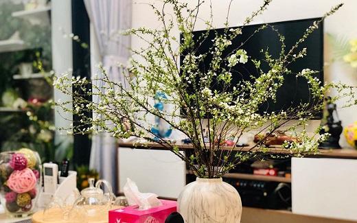 Cách chọn mua và cắm hoa tuyết mai chơi Tết