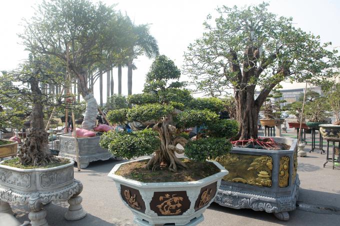 """Ngắm dàn cây thế """"khủng"""" tại hội chợ xuân đón Tết Tân Sửu"""
