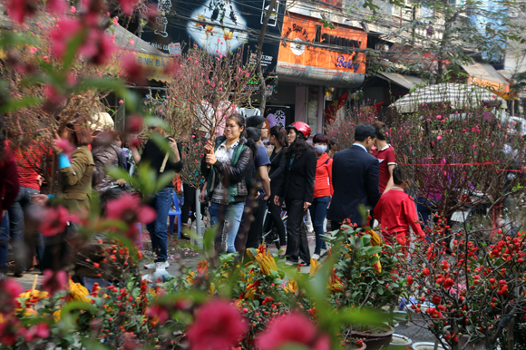 Hà Nội tổ chức 89 điểm chợ hoa xuân phục vụ Tết Tân Sửu 2021