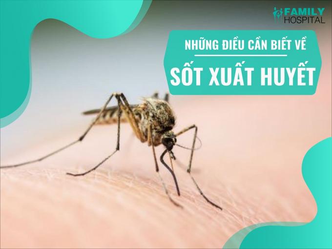 Cả nước có 50.473 trường hợp mắc sốt xuất huyết, dịch đang gia tăng