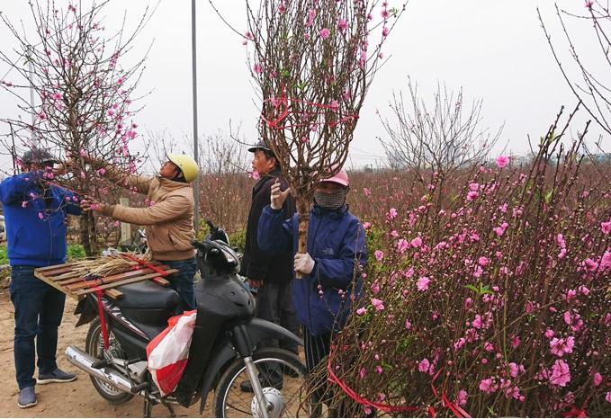 Phong phú hoa, cây cảnh chơi Tết Nguyên đán Tân Sửu