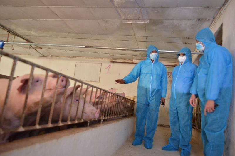 Giá lợn hơi bắt đầu tăng trở lại