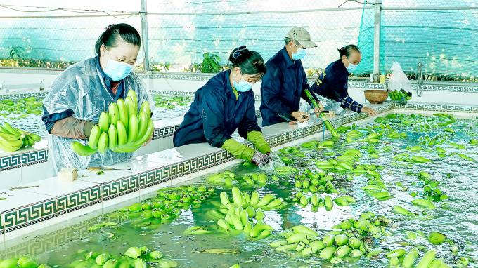 Sản xuất nông thủy sản: Cần thêm các giải pháp trọng tâm để vượt qua khó khăn