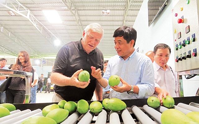 Việt Nam là nước sản xuất xoài lớn thứ 13 thế giới