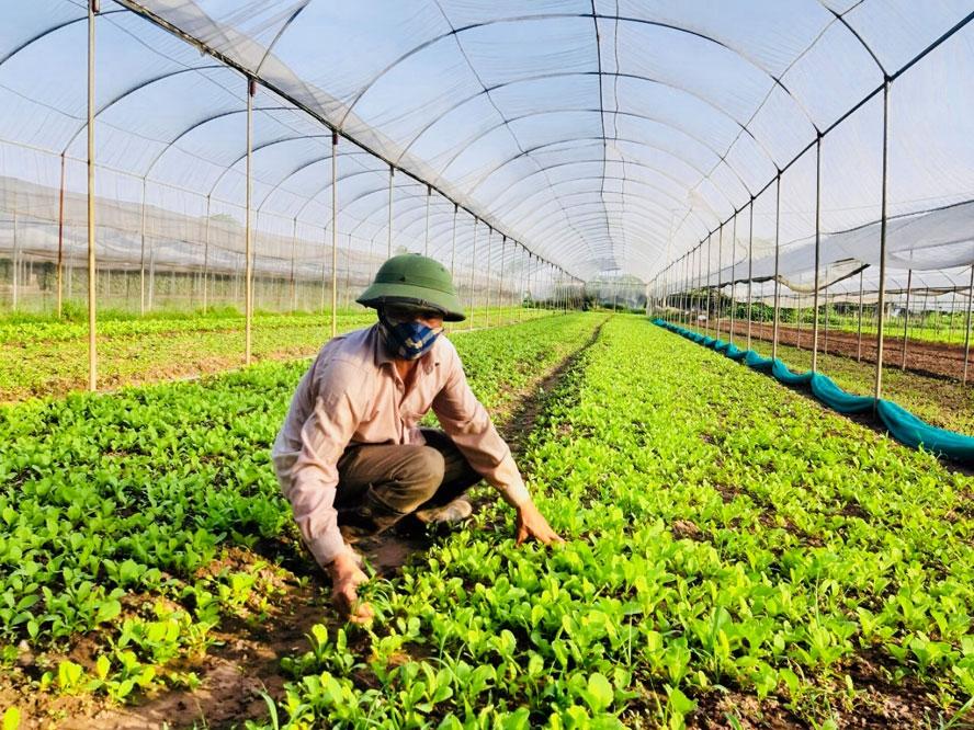 Thống nhất chủ trương xây dựng 3 phương án tăng trưởng ngành nông nghiệp Hà Nội