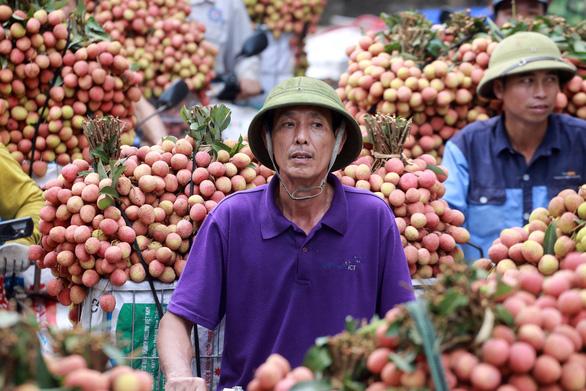 164 thương nhân Trung Quốc được phép đến Bắc Giang mua vải thiều