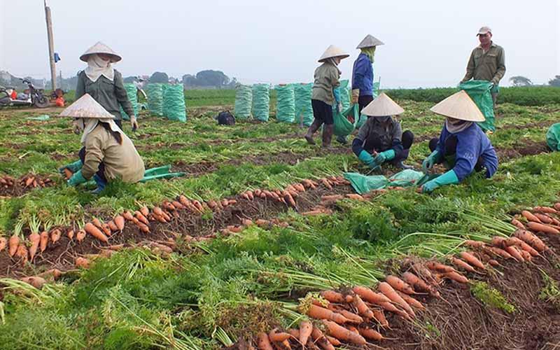 Bộ Công Thương đề nghị tháo gỡ cho nông sản Hải Dương