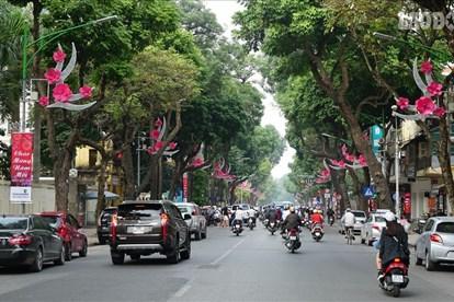 Trang trí hoa, cây cảnh đón Tết Nguyên đán Tân Sửu tại Hà Nội