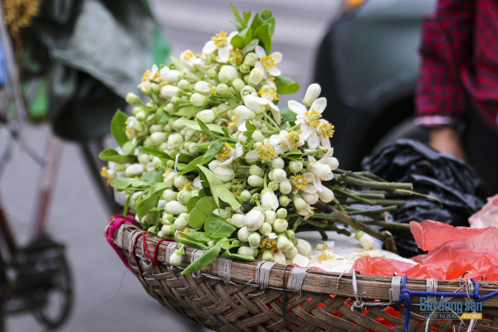 Mua hoa bưởi