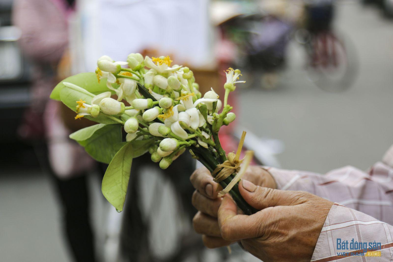 Hoa bưởi trên phố Hà Nội