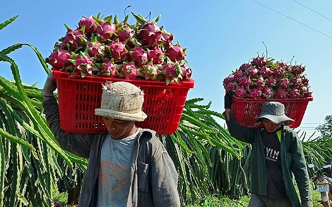 Xuất khẩu rau quả