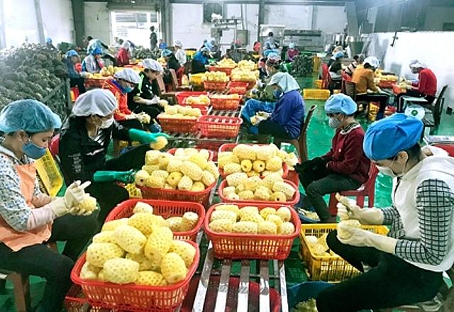 Hà Nội đã và đang triển khai nhiều giải pháp nâng cao năng lực chế biến nông sản, đáp ứng yêu cầu thị trường trong nước và xuất khẩu.