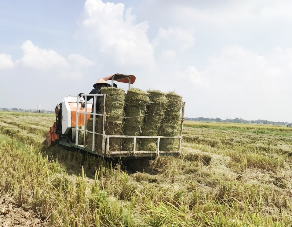 Nơi vùng xanh công tác sản xuất, thu hoạch nông sản được đẩy mạnh triển khai, tạo nền tảng cung ứng cho vùng đỏ