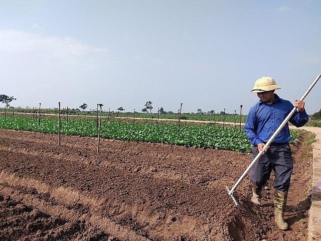 Nông nghiệp Thủ đô đã góp phần bảo đảm nguồn cung lương thực, thực phẩm cho thị trường trong bối cảnh dịch Covid-19 diễn biến phức tạp