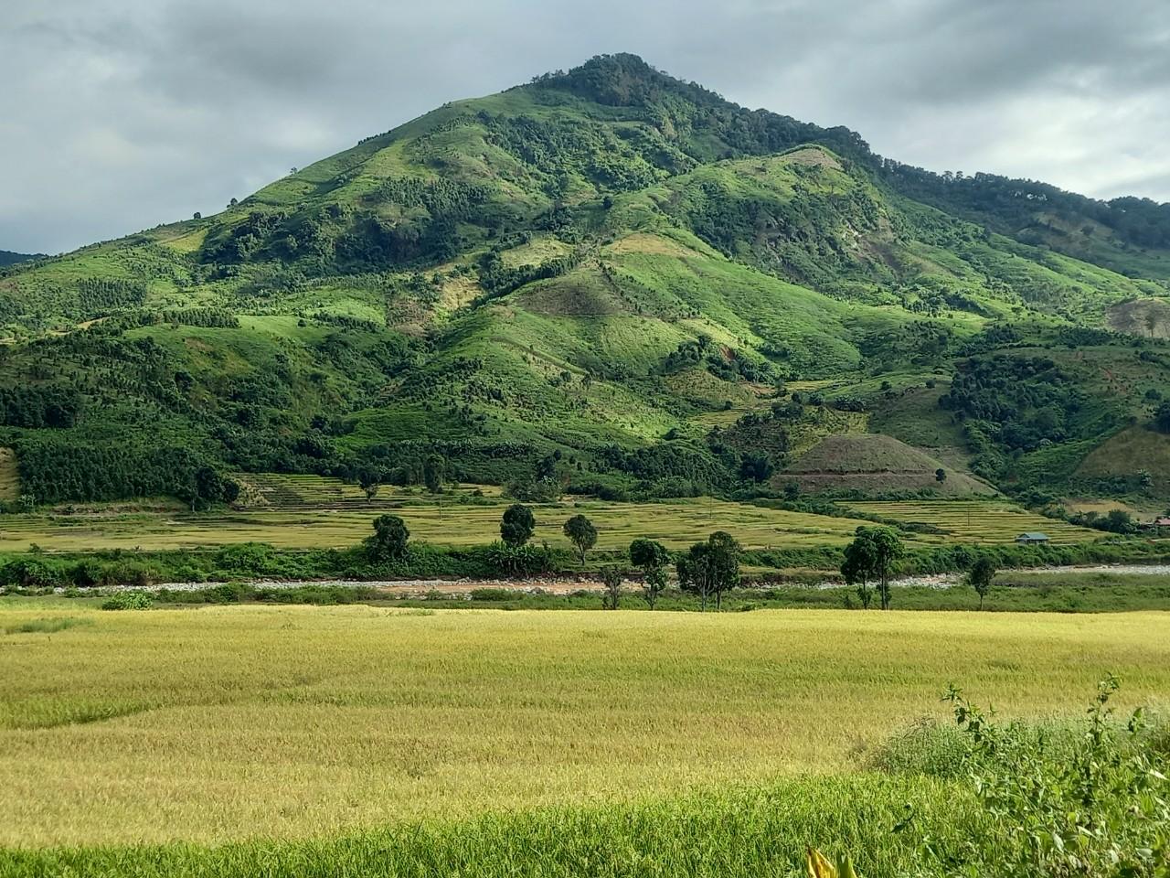 Một góc cánh đồng lúa tuyệt đẹp ở xã Ngọk Lây.
