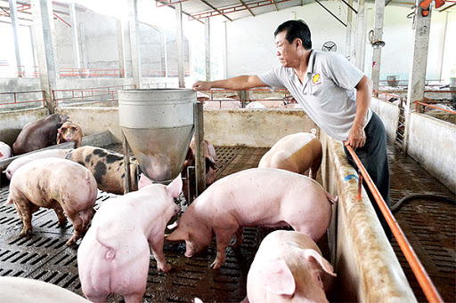 Giảm 50% mức thu phí trong chăn nuôi.