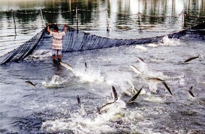 Ngành thủy sản Hà Nội hướng đến sản xuất sạch.