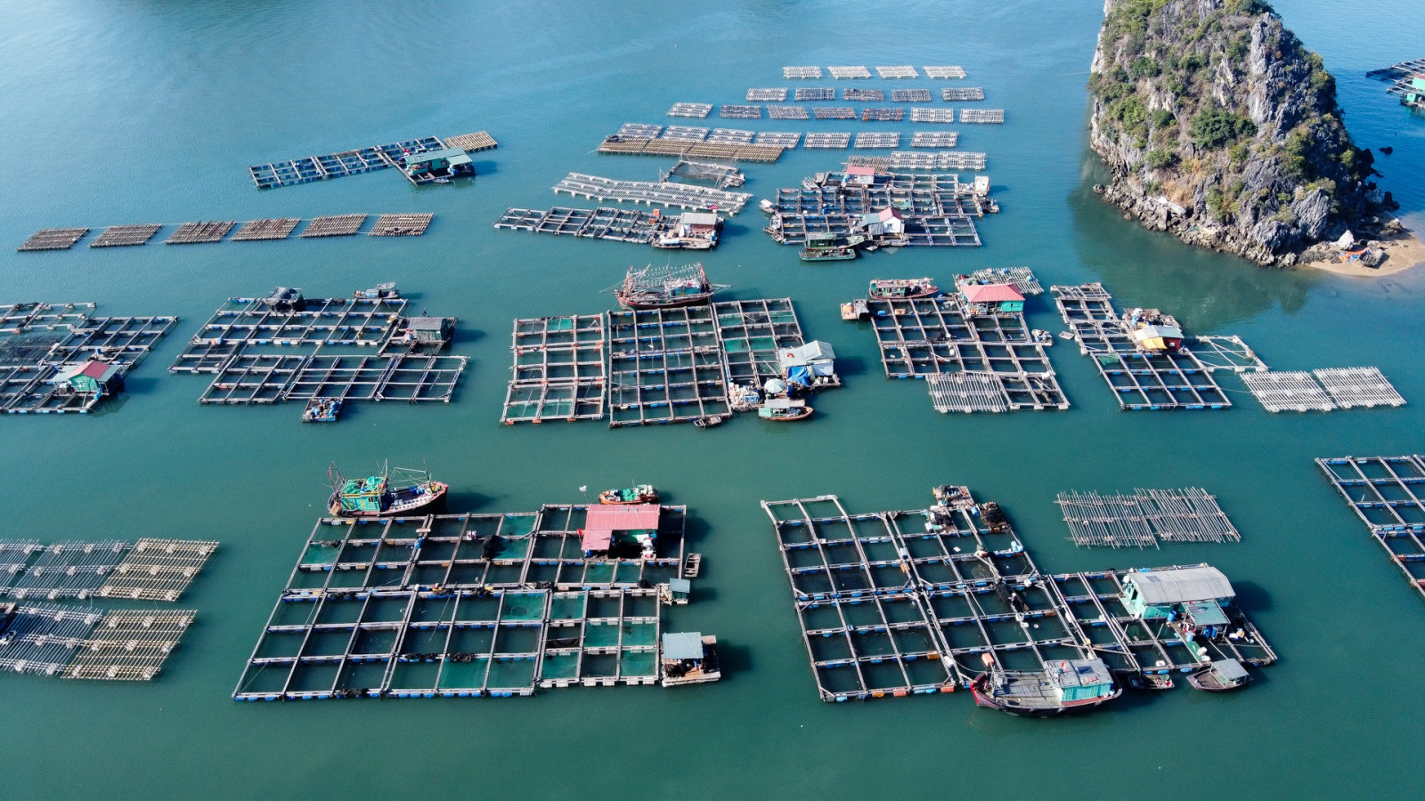 Nuôi cá lồng bè tại đảo Ông Cụ (TP.Cẩm Phả, Quảng Ninh).