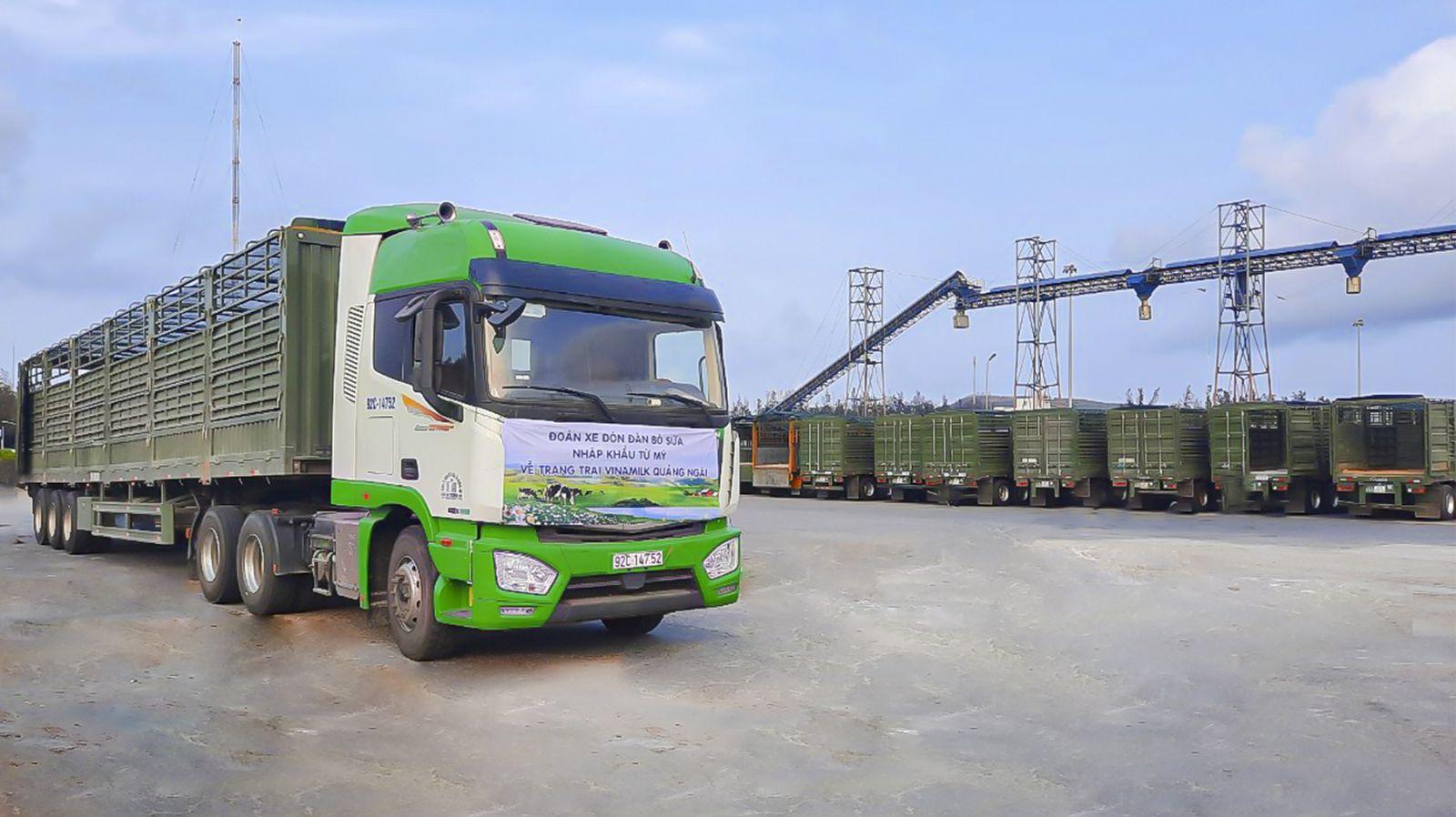 THILOGI vận chuyển bò nhập khẩu cho Vinamilk