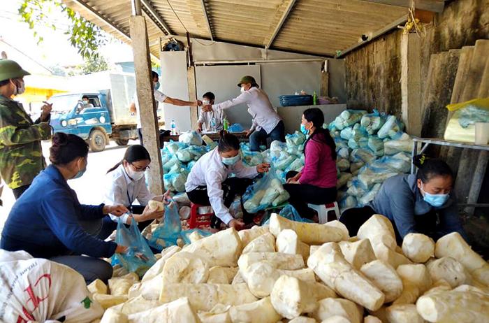 Hội Nông dân huyện Ba Vì hỗ trợ tiêu thụ măng cho các hội viên hội nông dân trên địa bàn