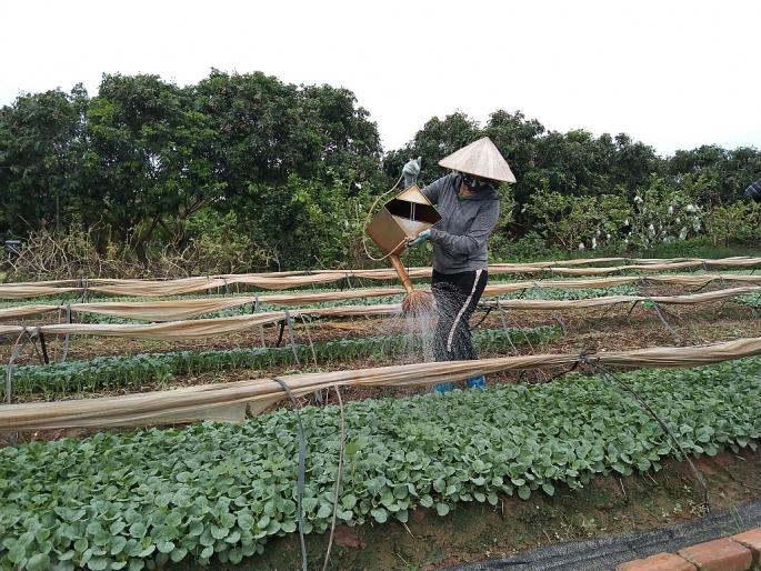 Nhiều người dân ở xã Song Phương vui mừng vì xã là vùng xanh, người dân được ra đồng khôi phục sản xuất kinh doanh.