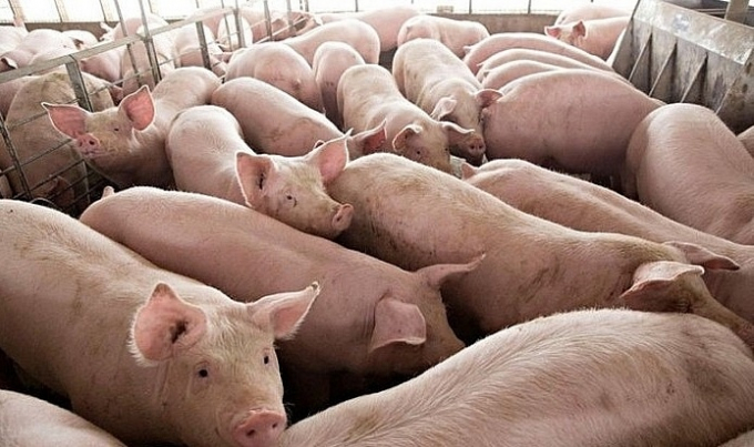 Bộ trưởng Bộ Nông Ngư nghiệp Campuchia kêu gọi các tỉnh giáp biên giới hạn chế nhập khẩu lợn Việt Nam, do lo ngại bệnh dịch tả lợn châu Phi.