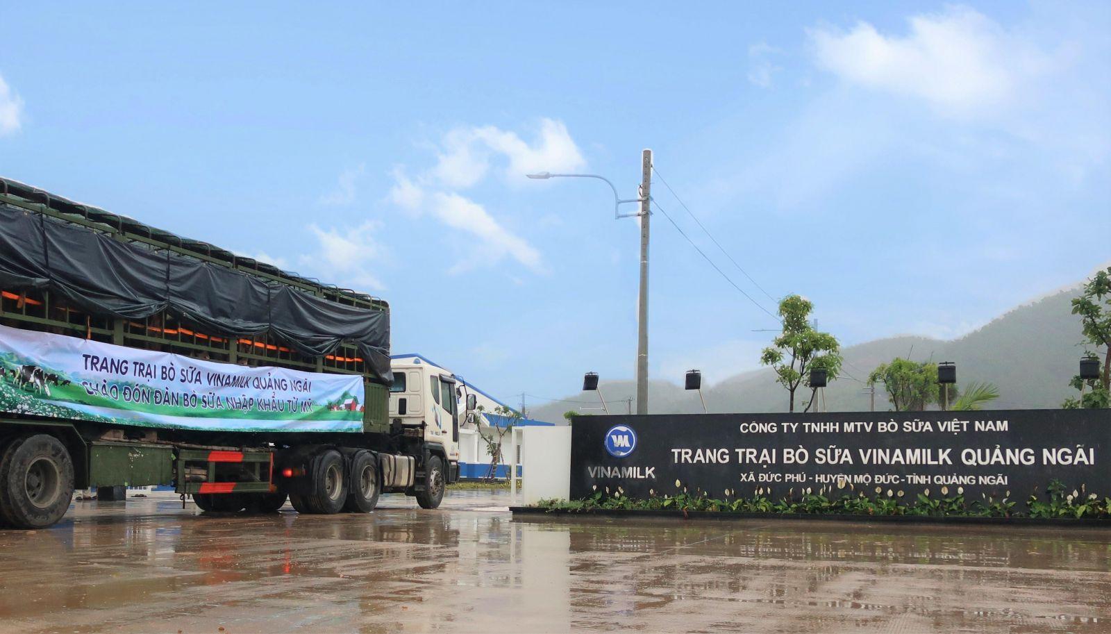 Vinamilk nhập khẩu hơn 2.100 bò sữa từ Mỹ về trang trại Quảng Ngãi