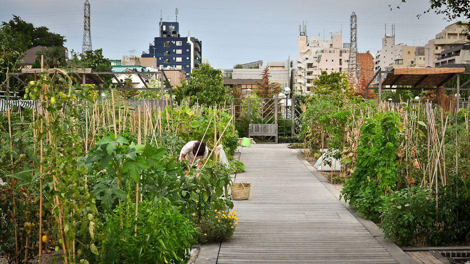 Một vườn rau gia đình ở Tokyo - Nhật Bản