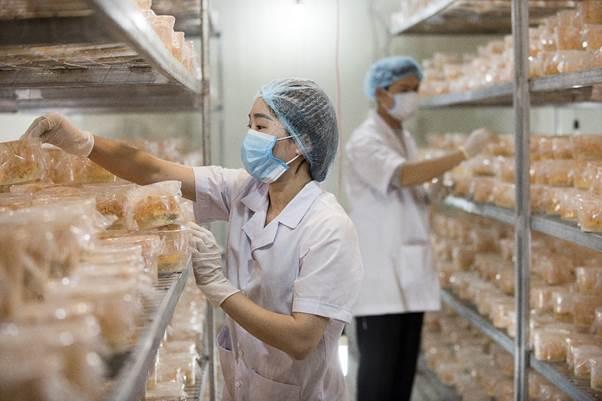 Nuôi cấy đông trùng hạ thảo tại Công ty CP Dược thảo Thiên Phúc (huyện Thanh Oai)