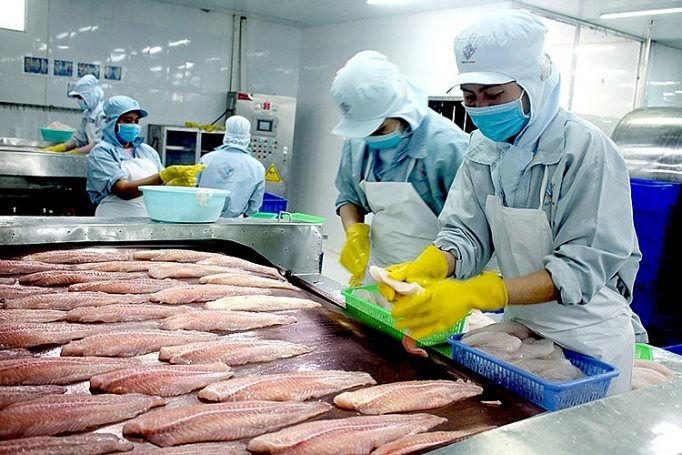 Xuất khẩu cá tra sang thị trường Ai Cập, UAE tăng mạnh
