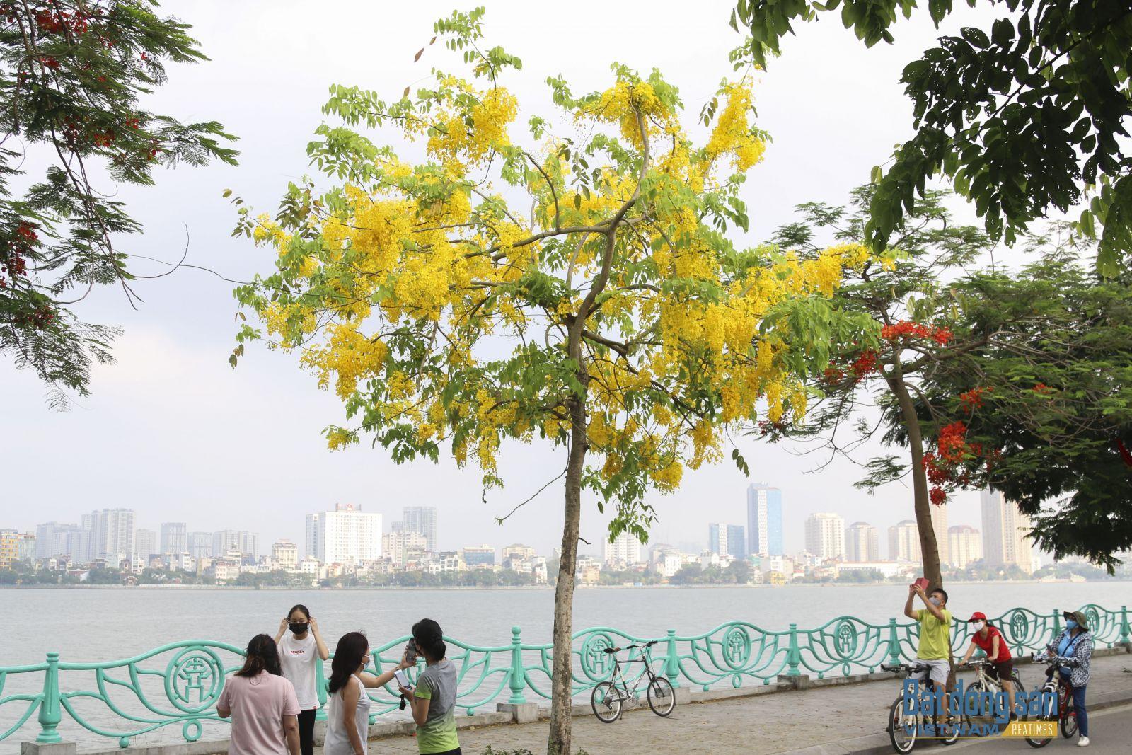 Ngắm nhìn loài hoa này, dù là người dân Thủ đô hay du khách phương xa cũng đều dễ dàng bị cuốn hút.