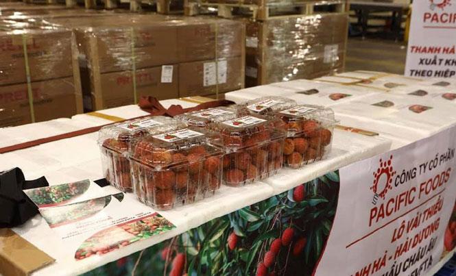 Lô vải xuất khẩu của Pacific Foods sẽ đến tay người tiêu dùng châu Âu trong 4-5 ngày tới.