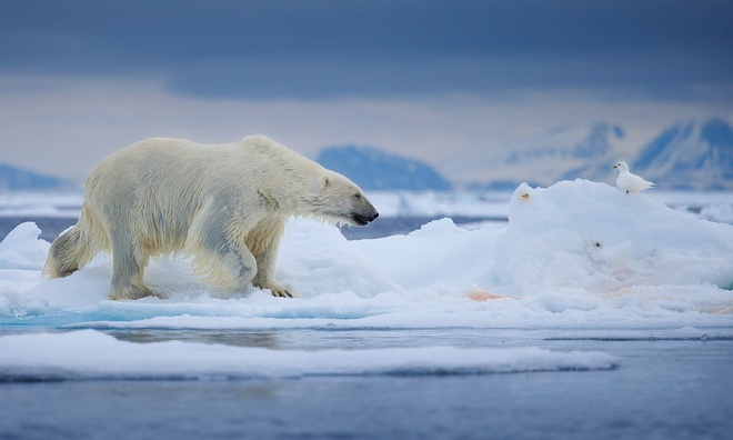Tình trạng băng tan ở Bắc Cực diễn ra ngày càng nhanh và nghiêm trọng hơn.