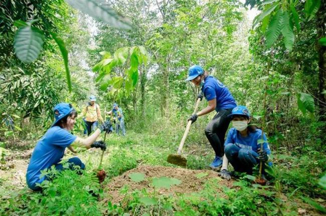 Dự kiến đến cuối năm 2021, cả nước trồng được 260.000 ha rừng.