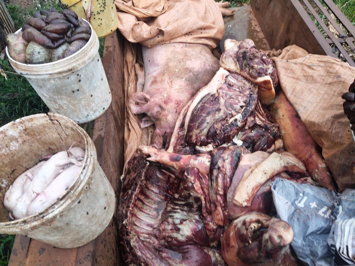 Lực lượng chức năng phát hiện số lợn mắc bệnh dịch tả lợn Châu Phi tại cơ sở giết mổ động vật của ông N.T.M