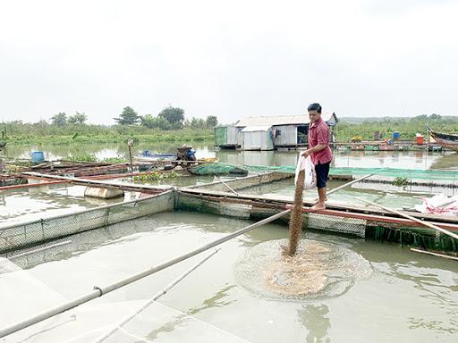 Nông dân 'mất mùa' vì vừa sản xuất vừa chờ nguyên liệu.