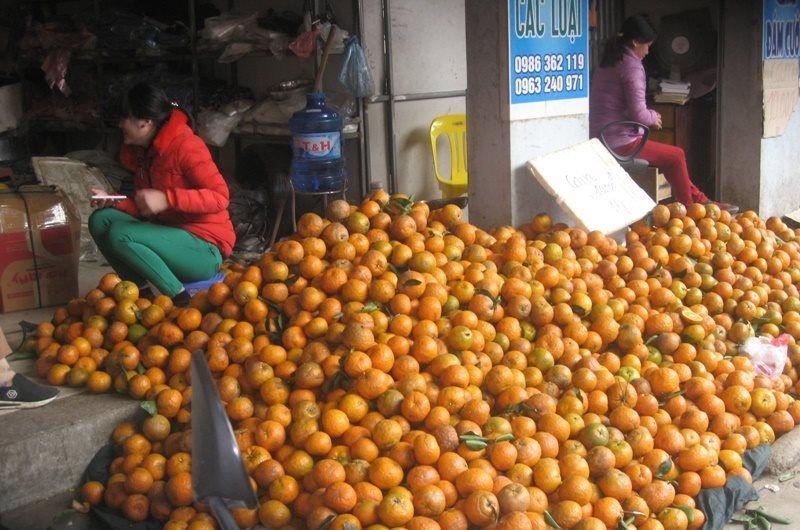 Cam Sành Hà Giang được mùa.