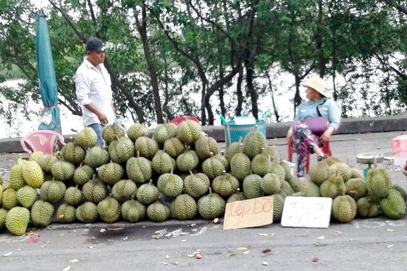 Nông dân Chợ Lách, Đồng Tháp trúng mùa Sầu riêng