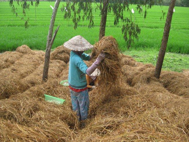 Việc thu gom rơm rạ tái chế thành phân vi sinh đã được triển khai tại 2 xã Đức Hòa và Xuân Thu (huyện Sóc Sơn, TP.Hà Nội). (Ảnh minh họa)
