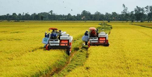 Nông dân các tỉnh miền Tây thu hoạch lúa Hè Thu